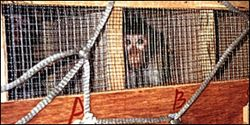 Air France- Stop Transporting Research Primates
