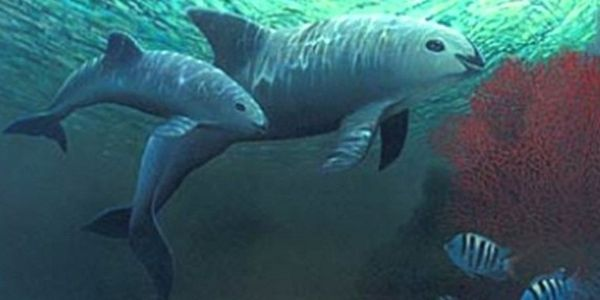 Save Snub-nosed Porpoise From Death and Extinction