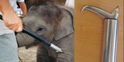 Rhode Island- Support Better Protection for Elephants