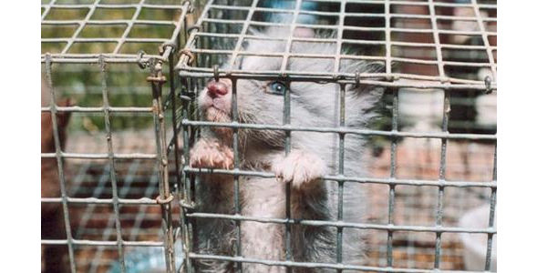 Stop the Dog and Cat Fur and Meat Trade!