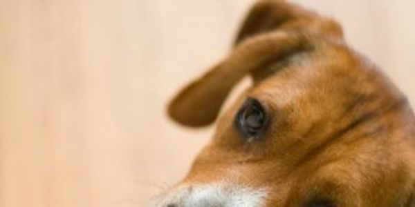 Demand Brazil treat street dogs humanely through a dog management program
