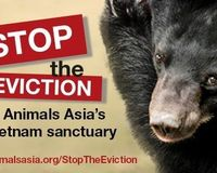 PLEASE Help STOP the EVICTION of Moonbears