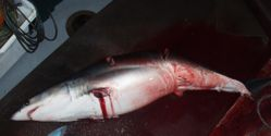 Stop shark finning in the UK & EU!