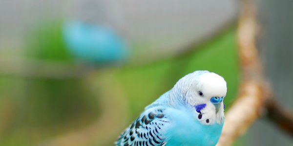 Investigate and Charge Cops who entered home without a warrant and killed pet parakeet!