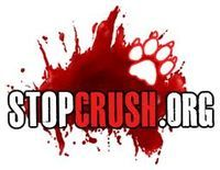 Prison for Animal Crush Videos