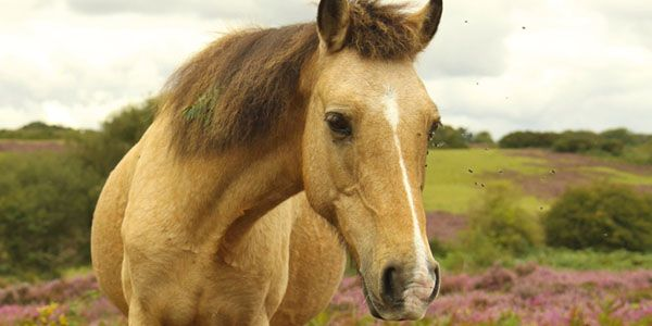 Punish the youths who beat and burnt a 2 week old foal to death and tortured its mother