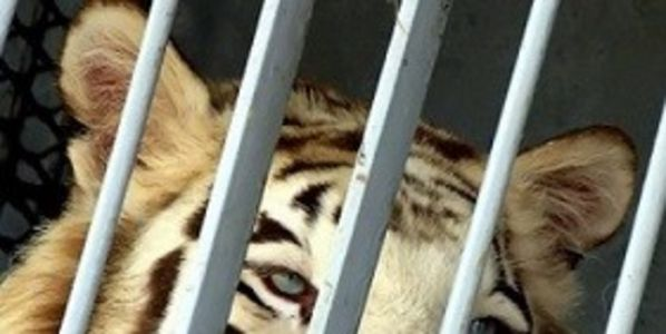 Prime Minister David Cameron: Please Ban Wild Animals in Circuses