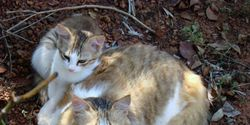 Demand an end to shooting feral cats in the Netherlands