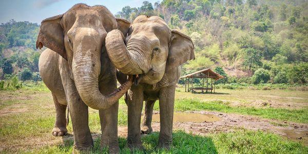 Elephants; photo Care2