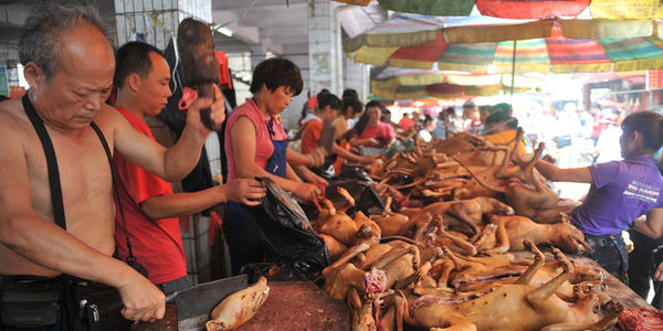 WE HAVE TO PUT A STOP TO THE YULIN DOG EATING FESTIVAL IN CHINA NOW!