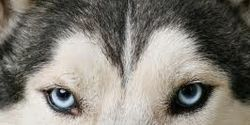 Sign to help ADLF speak out for sled dogs!