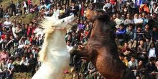 Stop China from forcing horses to fight for the entertainment!