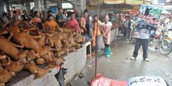 Oppose to dog eating festival starting 21st June.