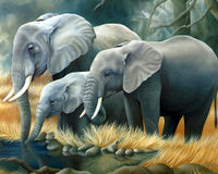 STOP KILLING ELEPHANTS FOR THEIR IVORY!!!