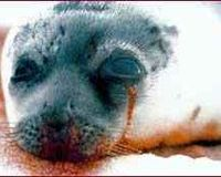 Email Campaign against the Killing of 70 000 Grey Seals