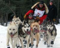 Boycott the Iditarod (Dog Sled Race)