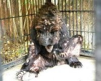 Don't Let Beno's Death be in Vain. Save the surviving animals in Surabaya Zoo.