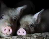 Stop 'Ag Gag' Laws Across the United States!