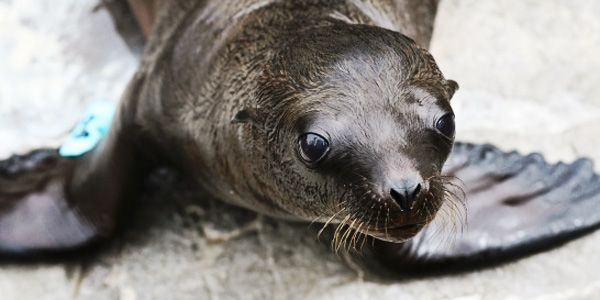 Stop Killing Sea Lions at the Bonneville Dam