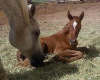 Horses Aren't Food! Don't Allow Cruel and Unsafe Slaughter