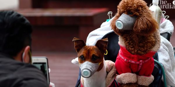 Dogs with masks