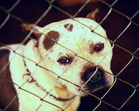 Stop The Cruel Dog-Fighting Trend of Trunking