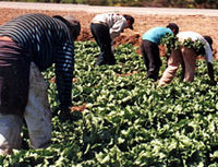 Stop the Bush Administration from Gutting Farm Worker Protections