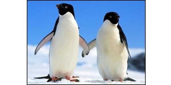 Help Save Penguins from Extinction