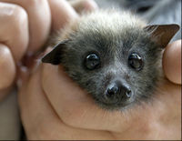 Stop Selling Fruit Bats