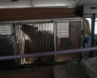 To free Russia's Olympic bear and other animals kept caged on parked bus