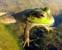 Help Save Frogs!