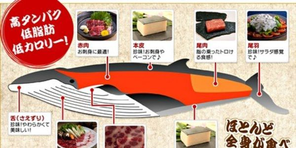 Rakuten in Japan – Stop Selling Ivory and Whale Meat! Save these Animals from Demise!!