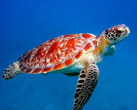 Save Sea Turtles: Ban Plastic Bags Now!