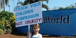 Sign Petition for Florida Senator Marco Rubio to Introduce a Bill to End Orca & Dolphin Captivity
