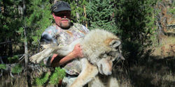 Demand Arrest for Wolf Poached from Sanctuary