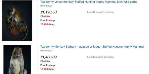 eBay listings of stuffed endangered animals