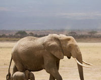 Bloody Ivory Campaign Petition
