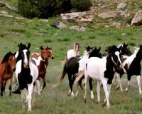 Ask the President to employ Executive Order to protect Mustangs& burros