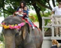 Keep Ban on Elephant Rides in Kentucky