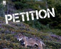 Fuer den Schutz des Wolfs in der Schweiz