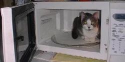 We Need Stricter Laws and Punishment for Teens that Placed Kitten in Microwave as a prank