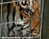 Save the Six Surviving Exotic 'Pets' in Zanesville, Ohio