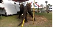 Save Nosey from Decades of Torture