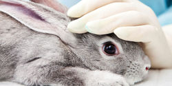 End Animal Testing in the U.S!