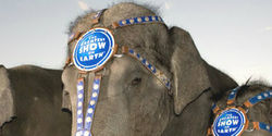 Charge Ringling Bros. with Animal Cruelty (AGAIN!)