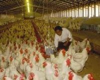 Hold The EU Accountable For The Hen Battery Cages