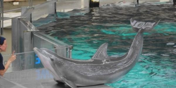 Help shut down Duisburg Dolphinarium in Germany...OVER 60 Dolphin Death's!!!