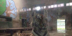 Tell Tianjin Zoo to Stop Neglecting Starved Tiger!