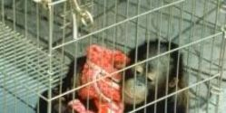 Stop the Illegal Orangutan Trade