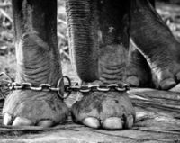 Release sick, abused elephant from performing in circus